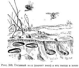 dovoennoe-pchelovodstvo-33.jpg