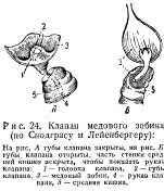 pchelovodstvo-v-1937-12.jpg
