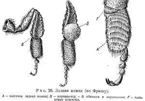 pchelovodstvo-v-1937-14.jpg