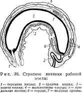 pchelovodstvo-v-1937-20.jpg