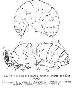 pchelovodstvo-v-1937-21.jpg