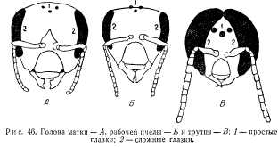 pchelovodstvo-v-1937-24.jpg