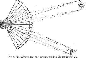 pchelovodstvo-v-1937-25.jpg