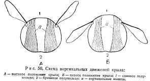 pchelovodstvo-v-1937-26.jpg