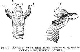pchelovodstvo-v-1937-3.jpg