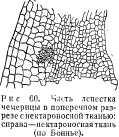pchelovodstvo-v-1937-34.jpg