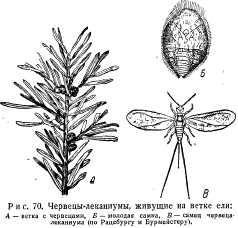 pchelovodstvo-v-1937-39.jpg
