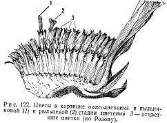 pchelovodstvo-v-1937-52.jpg
