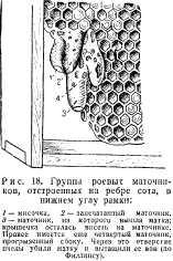 pchelovodstvo-v-1937-9.jpg